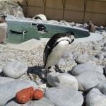 Pinguine-neben-3D-Druck-Figur