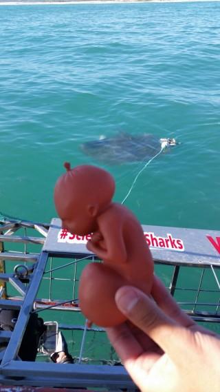 3D-Druck-Figur-mit-weißem-Hai