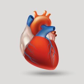3D-Druck-von-Organen